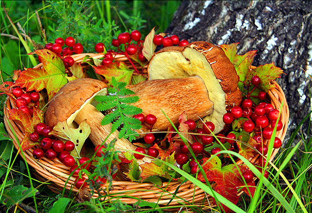 Фестиваль грибов и ягод в Ботаническом саду