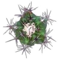Фото №4 - Тест: Выбери кактус, и мы скажем, насколько ты колючая 🌵