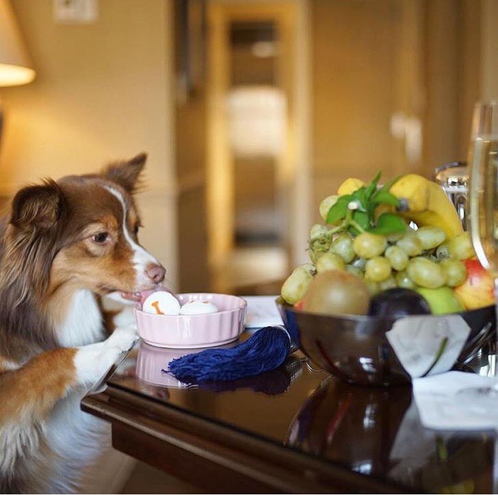 Фото №4 - Душ из слизи и мяукающий сосед: самые необычные услуги в отелях