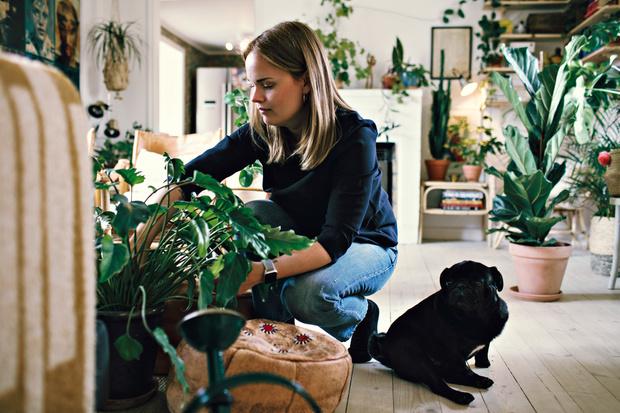 комнатные растения по знаку зодика