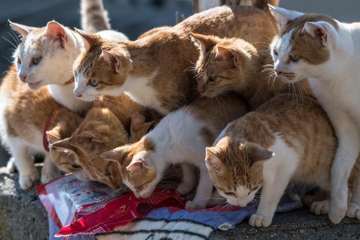 Фото №1 - Удивительная и печальная история Острова кошек