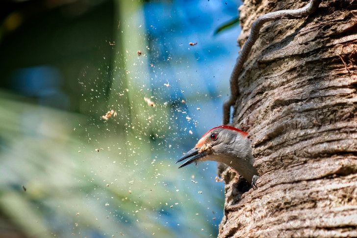 Фото №2 - По ком стучит дятел: 6 занимательных фактов о лесных птицах
