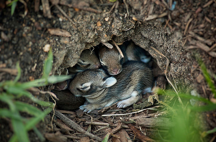 Фото №7 - Не только ценный мех: 11 удивительных фактов о кроликах