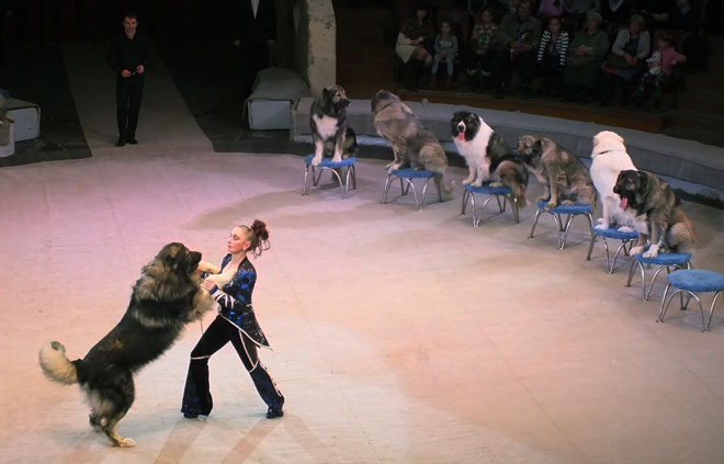 Фото №3 - Дан Запашный: «Шимпанзе Мальта ревнует меня к невесте»