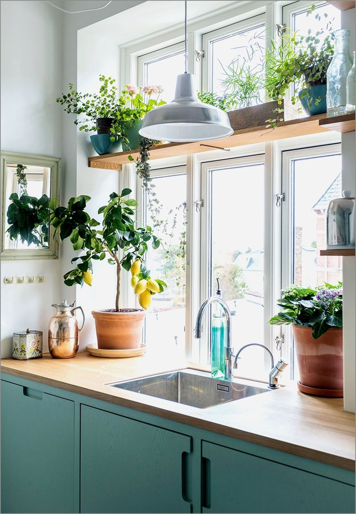 Фото №3 - Растения на кухне: 7 практичных идей