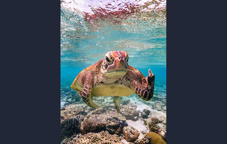 Фото №2 - Объявлены победители конкурса лучших комедийных фото дикой природы (галерея)