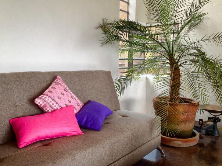 как посадить косточку финика в домашних условиях