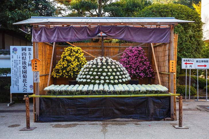 Фото №1 - Что для японцев значит цветок хризантемы?