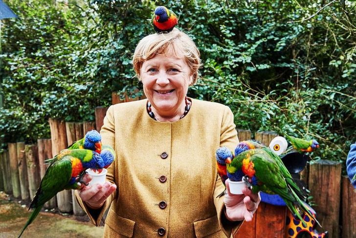 Фото №1 - Канцлер на птичьих правах