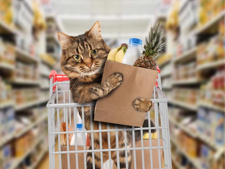 Кот тайно пробрался ночью в магазин