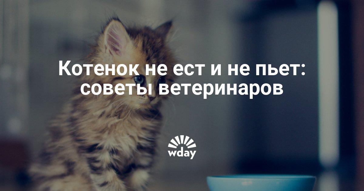 Почему котенок не ест