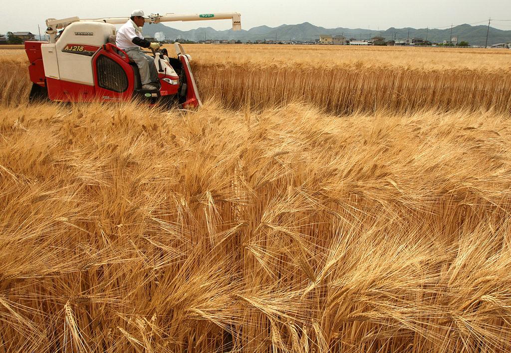 К чему снится поле пшеницы женщине