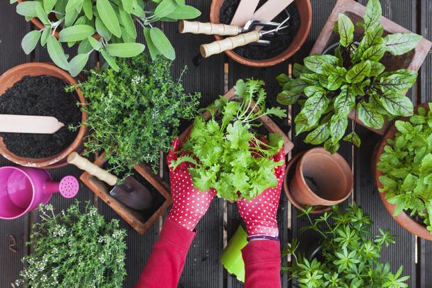 как быстро вырастить зелень на подоконнике