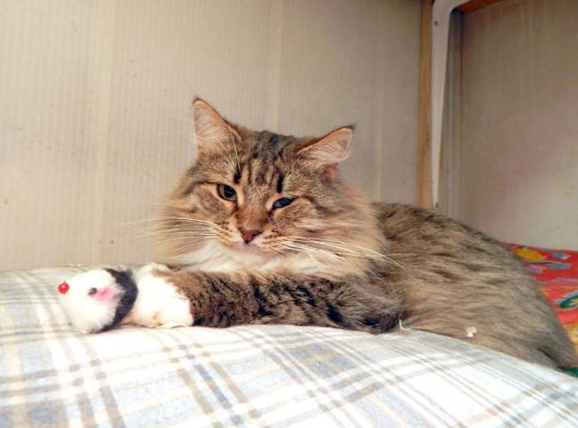 Фото №2 - Котопёс недели: кот Камыш и пёс Дунай