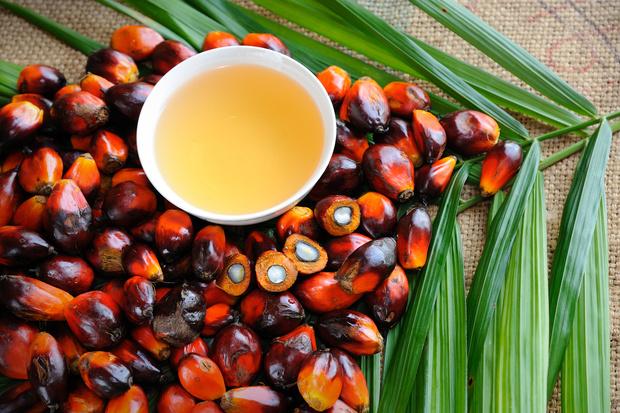 Почему почти во все продукты добавляют пальмовое масло