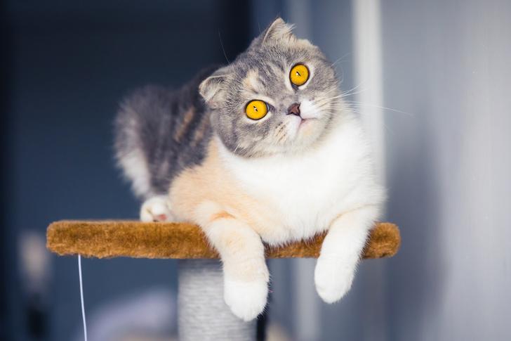 Цвет кошки: что обозначает