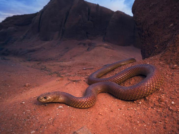 Фото №3 - К чему снятся змеи и еще 6 самых популярных снов (и их значения)