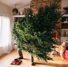 Как правильно выбросить елку, чтобы не накликать несчастье