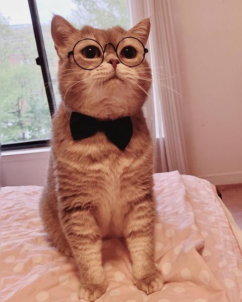 Фото №4 - Инста дня: Этот кот про моду знает больше, чем ты 😂
