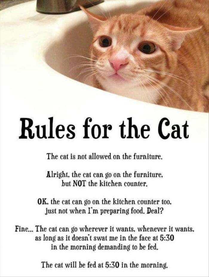 Фото №2 - Лучшие мемы про котов со всего Интернета