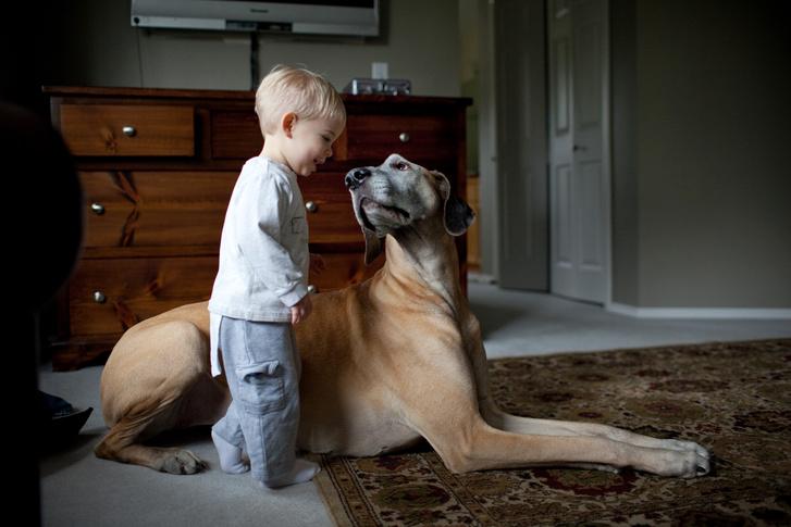 Фото №9 - 5 пород собак-долгожителей и 5 самых недолговечных