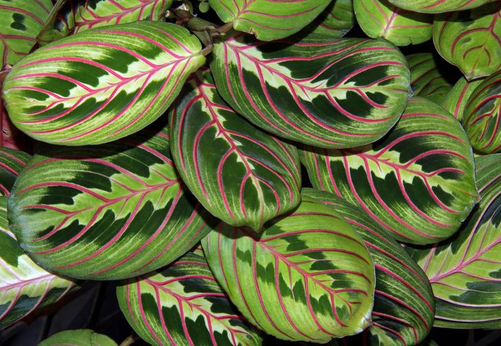 Фото №9 - Комнатные растения, которые помогут пережить сезон простуд