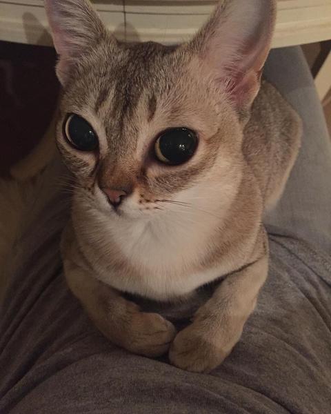 Фото №4 - Кто сказал «мяу»: Варум, Чиповская, Свиридова о любимых кошках