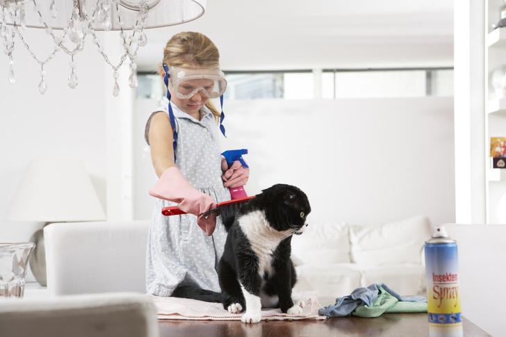 как избавится от аллергии на кошек