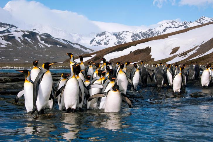 Фото №3 - Почему пингвины не летают
