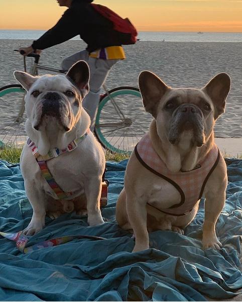 Фото №12 - Домашние животные звезд: собаки, кошки, лемуры, свиньи и даже улитки!