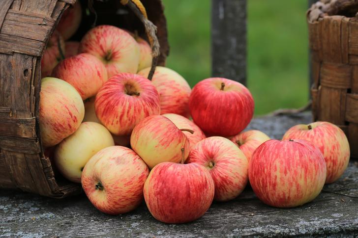 Фото №2 - Мед, яблоки и еще 5 продуктов, которые могут вас отравить
