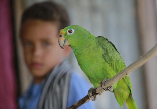 Фото №7 - В мире животных: самые известные и жуткие истории детей-маугли, которых воспитывали звери, а не люди