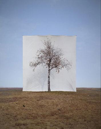Фото №2 - Myoung Ho Lee's Trees