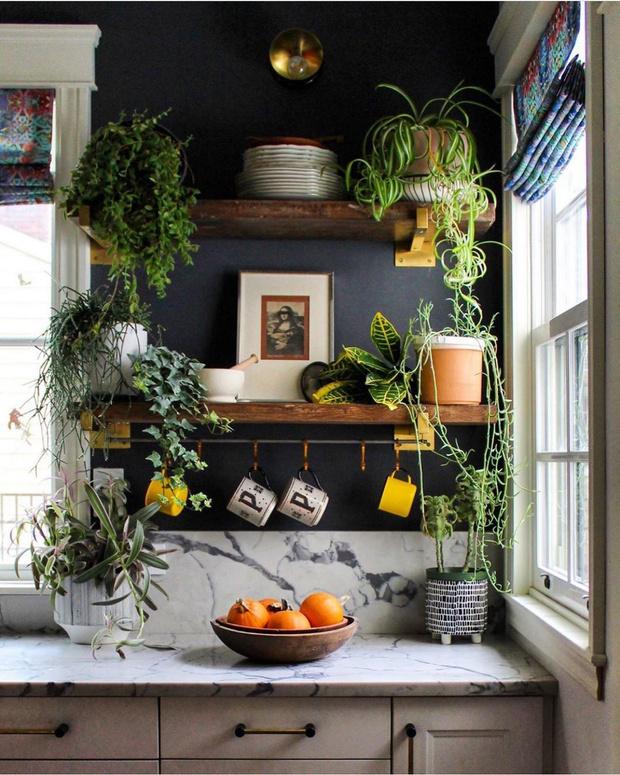 Фото №8 - Растения на кухне: 7 практичных идей