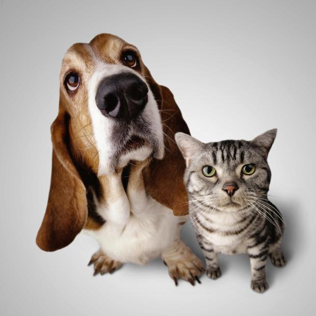 Фото №1 - Карта: где в мире больше любят кошек, а где— собак