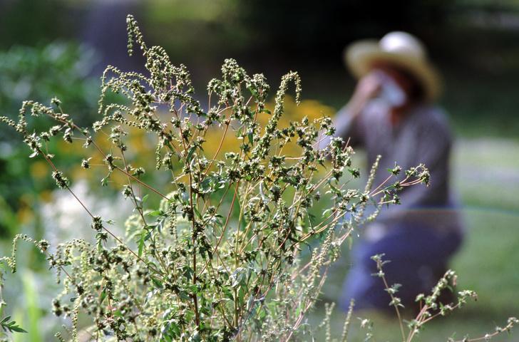 Фото №1 - Аллергический дерматит: лечение народными средствами