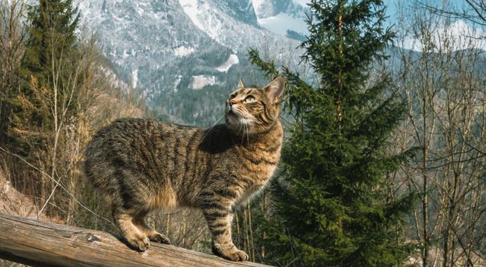 Кошка покорила вершину горы ради воссоединения с семьей