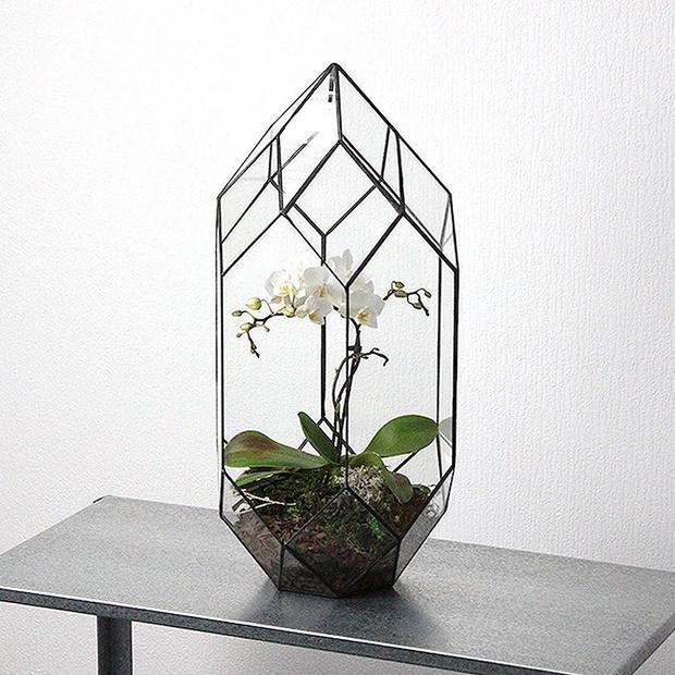 Фото №3 - Весенний флорариум с орхидеей: советы по изготовлению и уходу