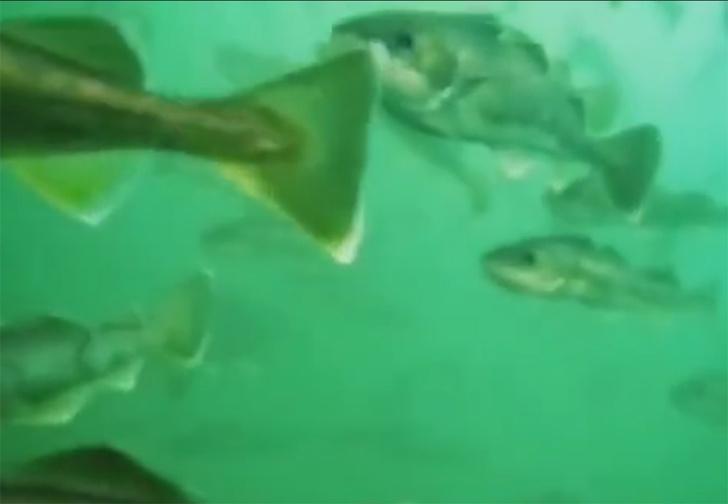 Фото №1 - Как выглядит зимой подводный мир, снятый на обычный смартфон (видео)