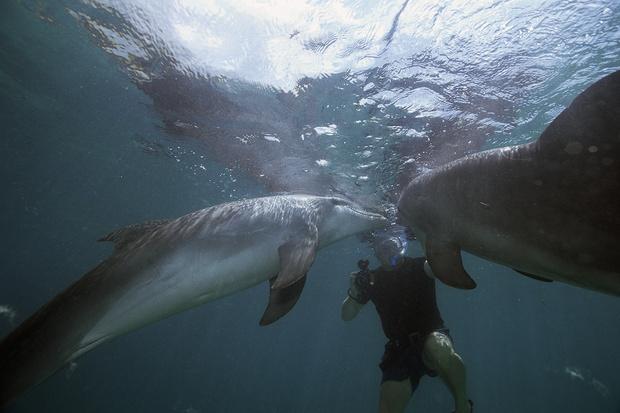 Фото №5 - 5 популярных заблуждений о животных, в которые все верят