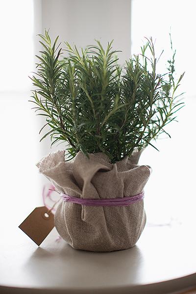 Фото №5 - Зарядись! 10 растений, которые улучшают самочувствие