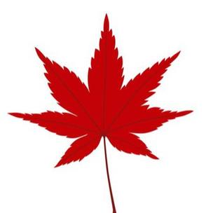 Фото №2 - Тест: Собери букет из листьев, а мы скажем, чем закончатся твои отношения