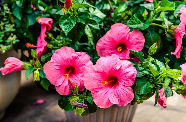 Фото №4 - Кактус цветет к деньгам: как гадать на комнатных растениях