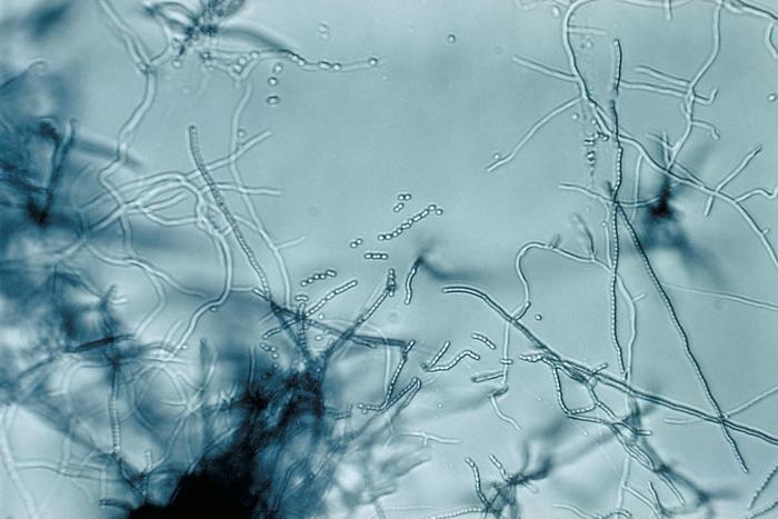 Фото №1 - В России обнаружили новый класс антибиотиков