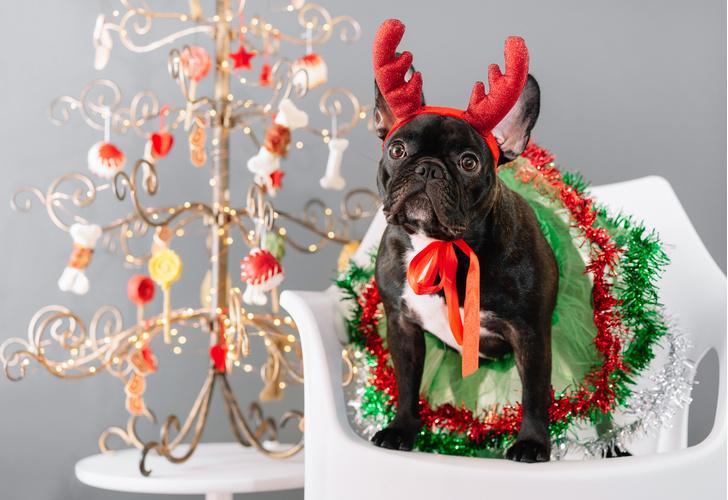 Фото №14 - Как мы все будем встречать Новый год 2021: показывают собачки