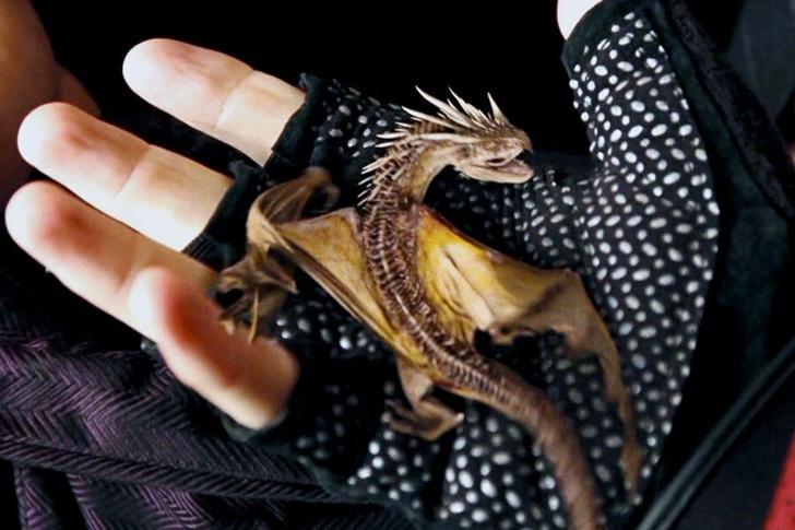 Фото №1 - «Гарри Поттер»: самые интересные и малоизвестные факты про драконов 🐲