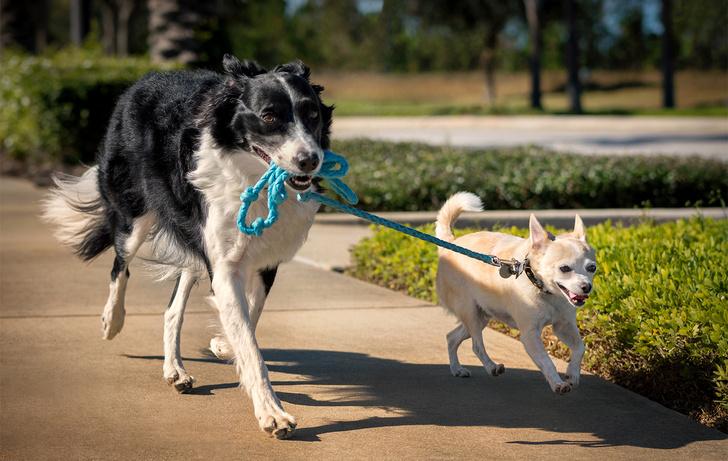 Фото №2 - 10 слов, которые вызывают у собаки экстаз (проверено учеными)