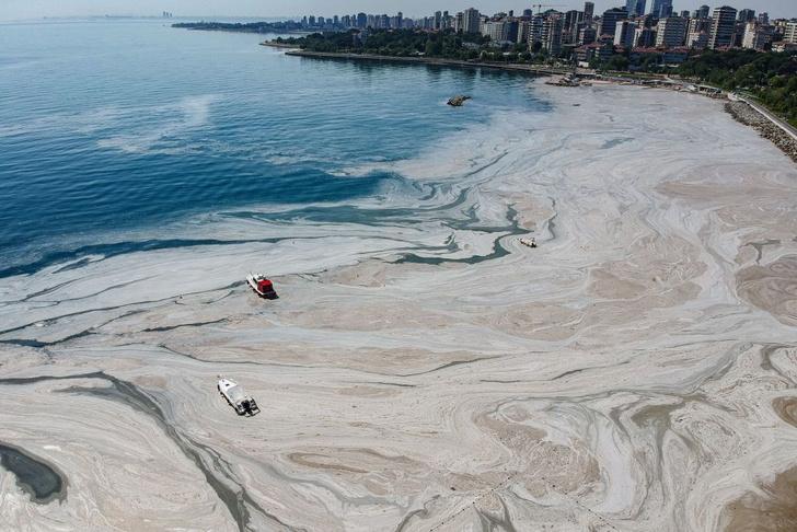 Фото №1 - Мраморное море покрылось слизью