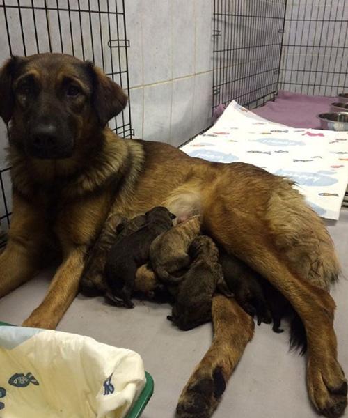 Фото №1 - Иван Ургант возьмет шефство над собакой, родившей в метро