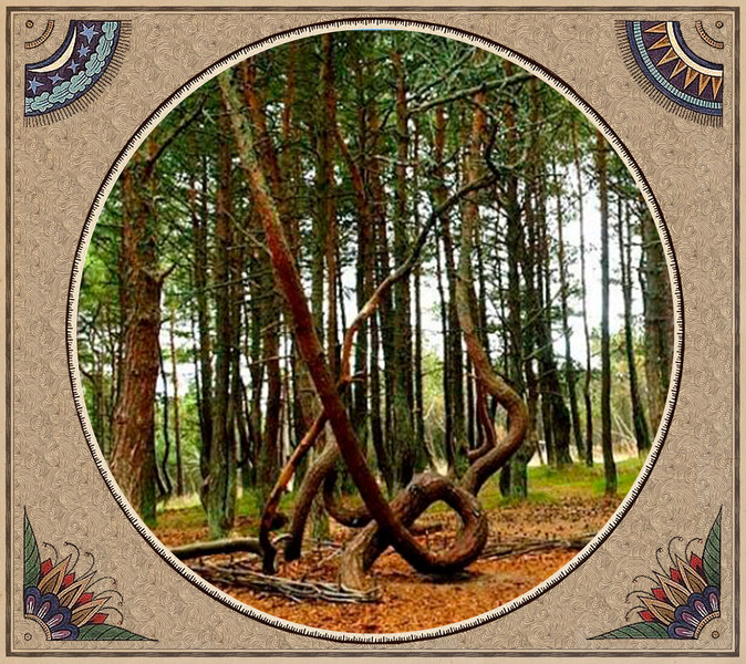 Фото №7 - Великан Куйва, белые лебеди и «танцующие» деревья: кто охраняет многовековые тайны Сейдозера